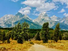 green-trees-and-mountains-under-blue-sky