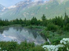 green-trees-near-lake